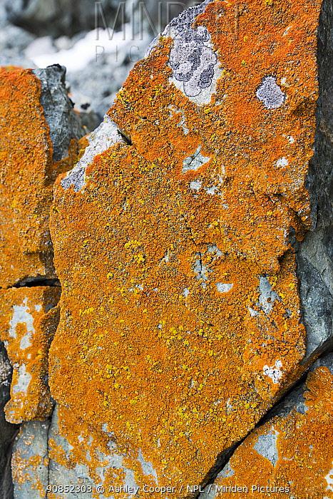 Lichen covered rock. Mist Rocks, Holdfast Point, Pernik Peninsula, Lallemand Fjord, Antarctica. January.