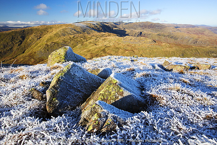 Rocks and grass covered with hoar frost on Red Screes, view towards Helvellyn. Lake District National Park, England, UK. November 2019.