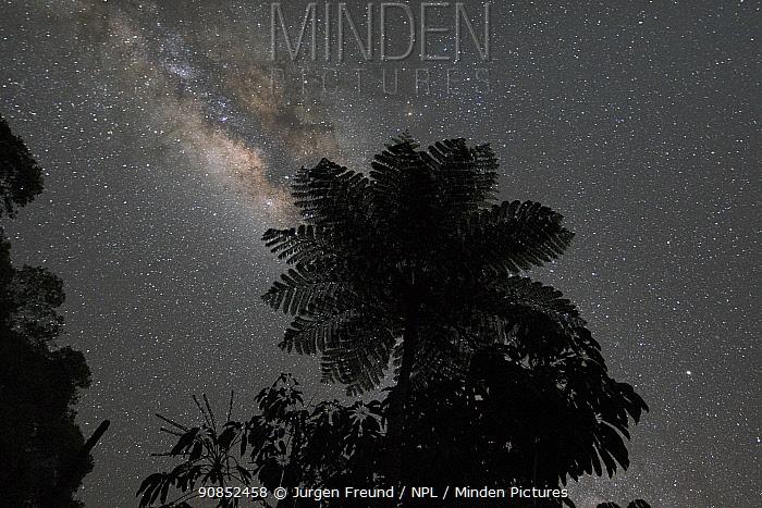Australian tree fern (Sphaeropteris cooperi) silhouetted against Milky Way in night sky. Queensland, Australia.