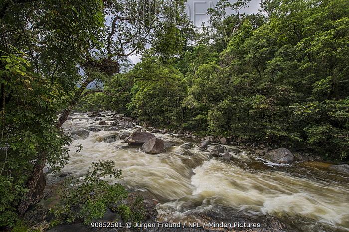 River through Daintree Rainforest. Mossman Gorge, Wet Tropics of Queensland, Australia. 2014.