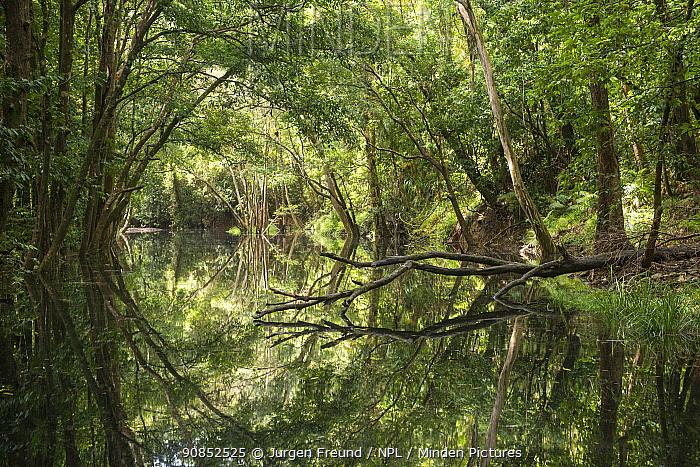 Trees of Daintree Rainforest reflected in creek. Wet Tropics of Queensland, Australia. 2015.