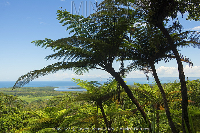 Tree ferns overlooking Daintree Rainforest and mouth of Daintree river. Wet Tropics of Queensland, Australia. 2015.