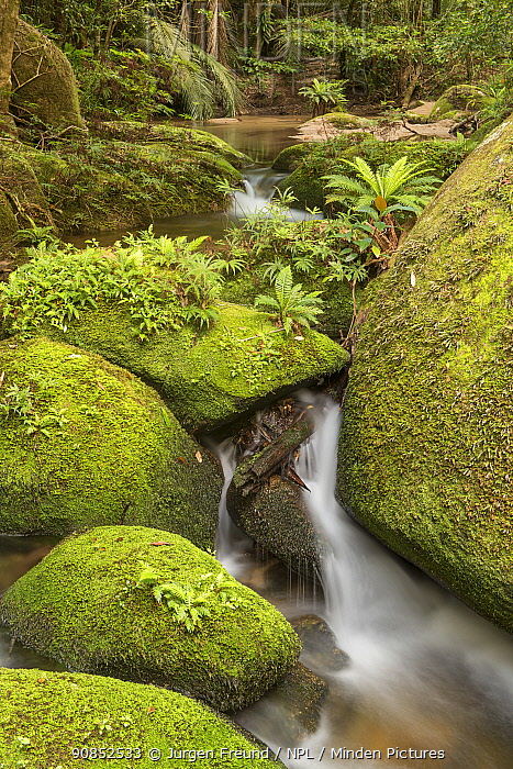 Moss covered boulders along forest creek with flowing fresh spring waters. Far North Queensland, Australia.