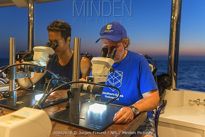 Scientists Dr. Dexter de la Cruz and Prof. Peter Harrison from Southern Cross University looking down microscopes at Coral larvae. Part of Coral IVF project to rear coral and replenish degraded sections of Great Barrier Reef. Queensland, Australia. 2019. Model released.