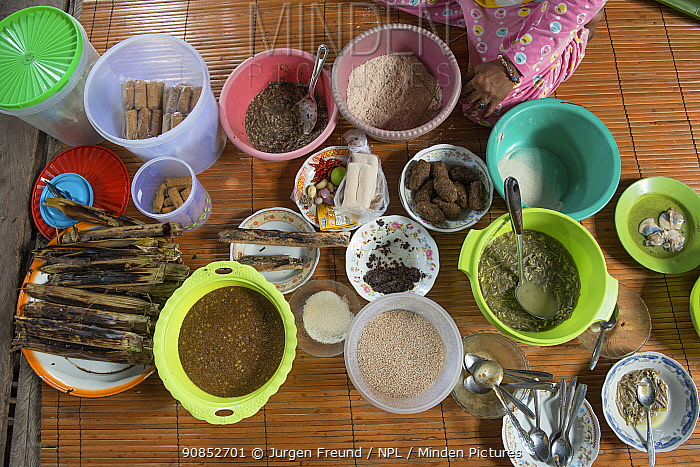 Ingredients used to prepare dishes of Sago, a starch staple most commonly extracted from pith of Sago palm (Metroxylon sagu). West Papua, Indonesia. 2018.