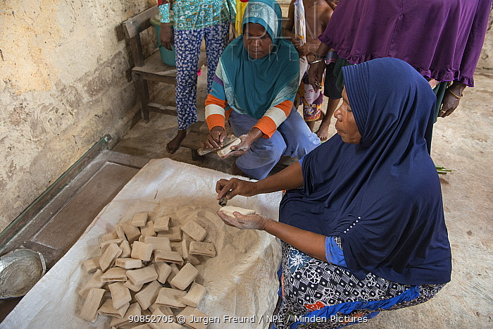 Women grinding sago, a starchy food staple most commonly made from Sago palm (Metroxylon sagu), into flour. West Papua, Indonesia. 2018.