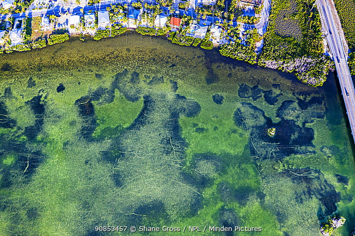 Aerial view of propeller scars in Seagrass bed, a result of careless boating in shallow beds. When propellers cut past the roots of Seagrass they inflict long-term damage to the beds. Florida Keys, USA. 2019.