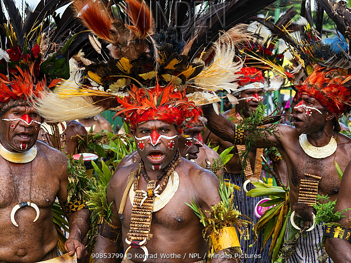 Papuan men in traditional dress with painted faces and headdresses, participating in Sing-sing gathering where traditional cultures including dance and music are shared. Morobe Show, Lae, Papua New Guinea. 2019.