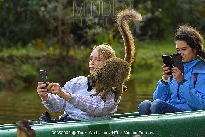 Tourist taking selfie of captive Common brown lemur (Eulemur fulvus) on her shoulder. Lemur Island, Andasibe, Madagascar. 2019.
