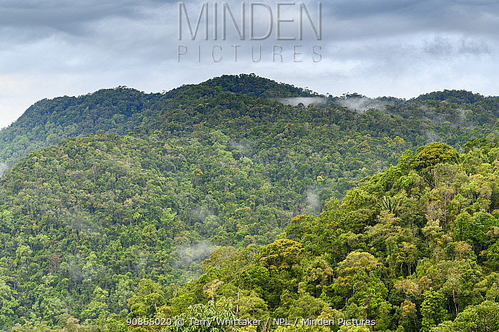 Tropical rainforest on hills. Ranomafana National Park, Madagascar. 2019.