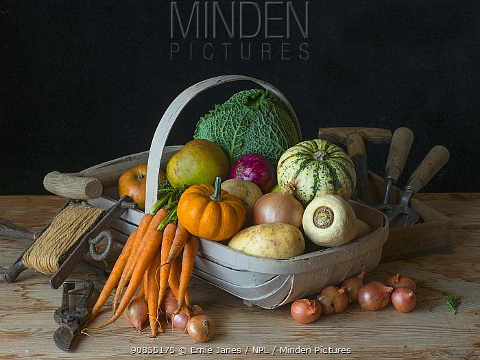 Garden trug full of home-grown fruit and vegetables harvested in autumn.