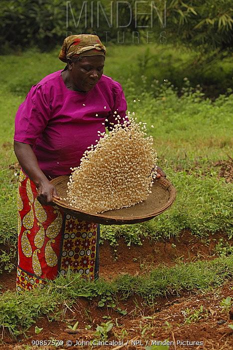 Luhya woman winnowing corn. Kakamega forest, Kenya. 2017.