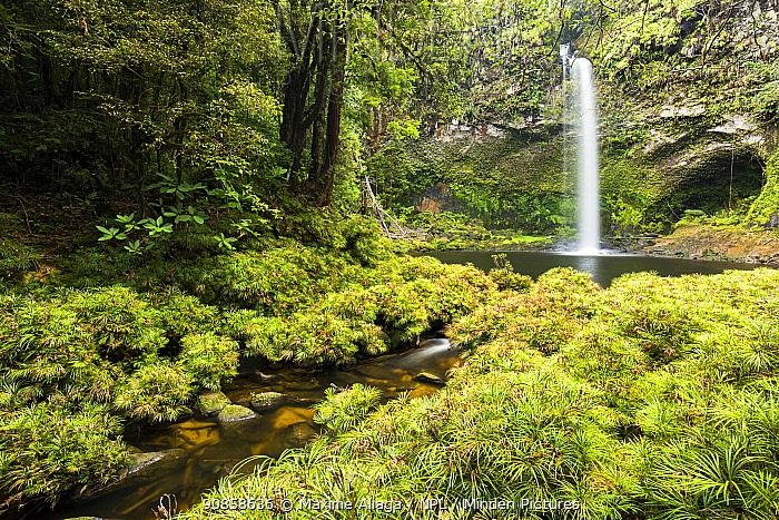 Btang toru water fall, Batang Toru Forest , North Sumatra