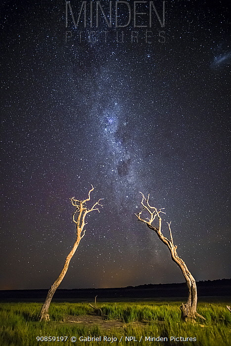 Dead trees and milky way, La Pampa , Patagonia, Argentina.