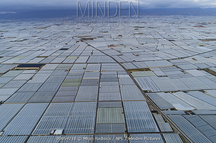 Aerial view of horticultural greenhouses for growing fruits and vegetables. The area is known as the sea of plastic' and contains the largest concentration of greenhouses in the world, covering 26,000 hectares. Almeria, Spain. December 2019