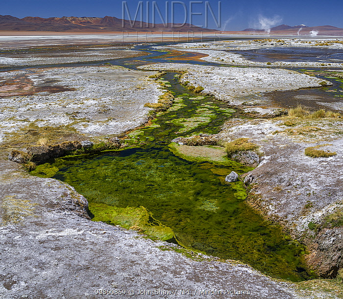 Thermal spring drains into Laguna Salada, in the high altiplano, Bolivia. In the distance, whirlwinds of salt dust rise from the shore. March 2014.