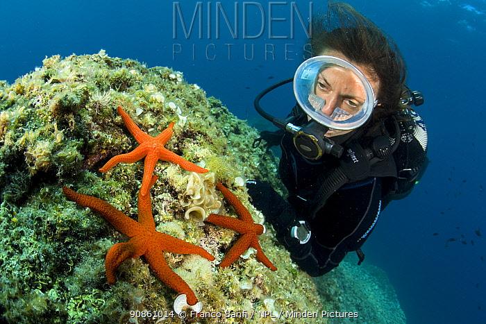 Scuba diver and Red sea stars (Hacelia attenuata) and Mediterranean red sea star (Echinaster sepositus) Punta Campanella Marine Protected Area, Costa Amalfitana, Italy, Tyrrhenian Sea, Mediterranean.