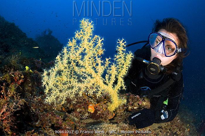 Scuba diver with Mediterranean Black coral (Gerardia savaglia / Savalia savaglia ) Vervece Rock, Marine Protected area Punta Campanella, Costa Amalfitana, Italy, Tyrrhenian Sea, Mediterranean.