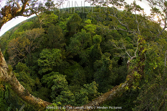 View of the rainforest canopy from the canopy tower at the Tiputini Biodiversity Station, Orellana Province, Ecuador, July.
