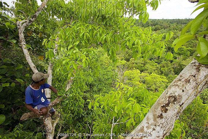 Eli Karey in the canopy of Badigaki forest, preparing to build a canopy blind. Aru Islands, Indonesia. September 2010.