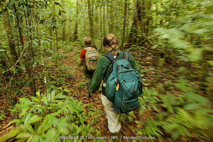 Orangutan researcher Cheryl Knott and son Russell Laman hiking through the rain forest, Gunung Palung National Park, Borneo. Model released.