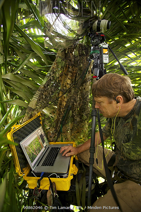 Photographer Tim Laman with laptop shooting in live view mode from his canopy blind, controlling a camera in a different tree with a wide angle view of the Greater Bird of Paradise display site, New Guinea, Indonesia 2010