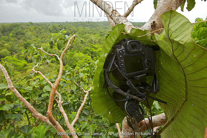 Canon 7D DSLR camera 'Leaf Cam' with back open. Used by Tim Laman to photograph Greater Birds of Paradise at their lek with a wide angle lens, New Guinea, Indonesia 2010