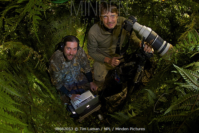 Photographer Tim Laman and Ornithologist Edwin Scholes in a blind to capture the Wahnes's Parotia, Papua New Guinea 2011