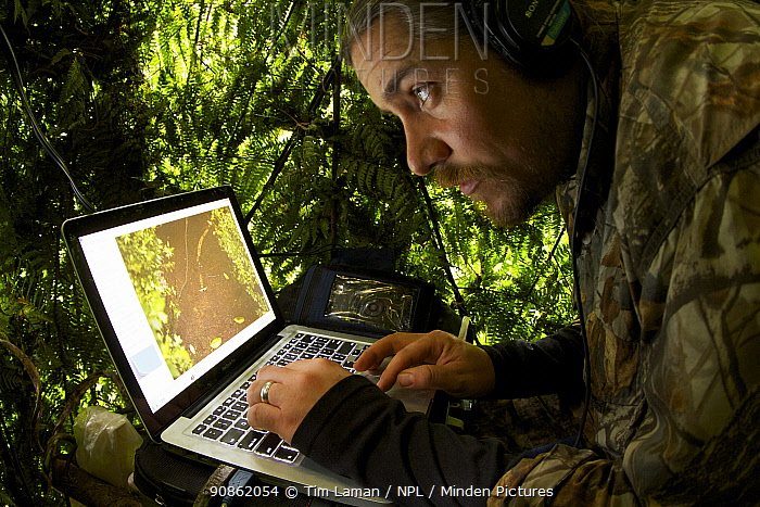 Ornithologist Ed Scholes at computer station in blind, operating remote controlled cameras to capture the Wahnes's Parotia, Papua New Guinea, 2011