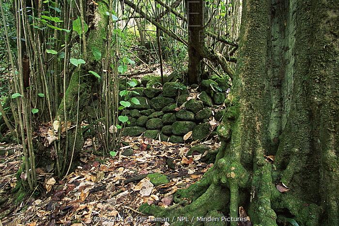 Stone wall from ancient Polynesian ruin on Nuku Hiva Island, Marquesas Islands, French Polynesia