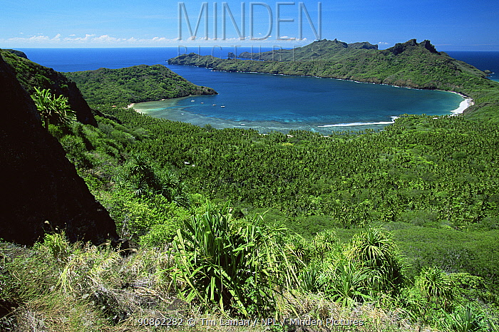 View of Anaho Bay, with Coconut palm plantation in lowlands and Pandanus plants in foreground. Nuku Hiva Island, Marquesas Islands, French Polynesia