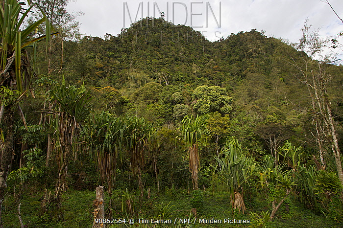 Forested mountain above Mu village, Chimbu Province, Papua New Guinea.