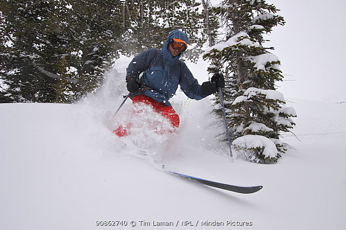 Skier Phil Atkinson skiing through deep powder snow above Denny Lake, Beartooth Mountains, Montana, USA May 2008