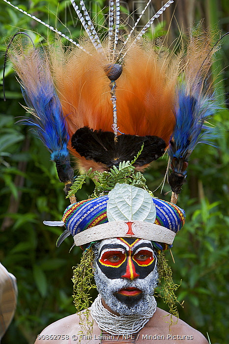 Villager in traditional feathered headdress at Payakona Village singsing ceremony. Mount Hagen vicinity in the Western Highlands Province, Papua New Guinea. September 2004