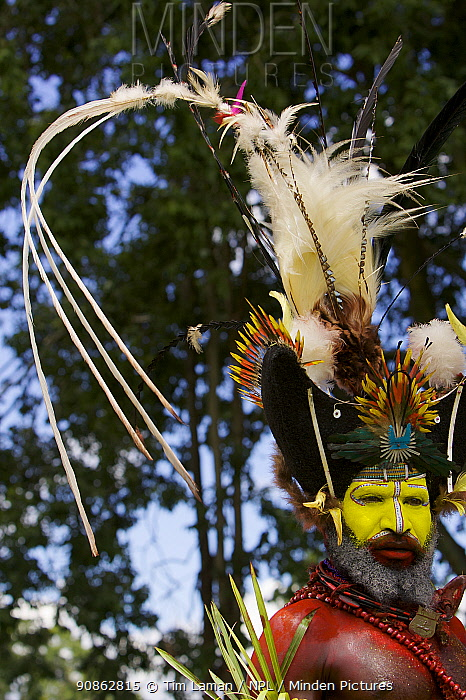 Traditional feathered headdress of Huli Wigmen from Tari area, Southern Highlands Province. Goroka, Eastern Highlands Province, Papua New Guinea. September 2004