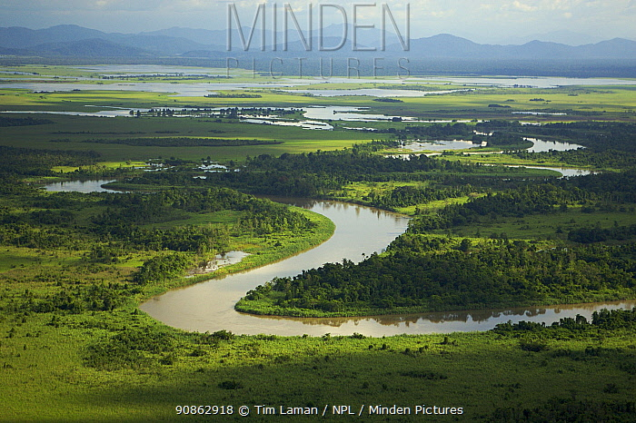 Aerial view of river, rainforest, and seasonally flooded grasslands in the Sepik Basin, East Sepik Province, Papua New Guinea, August 2005