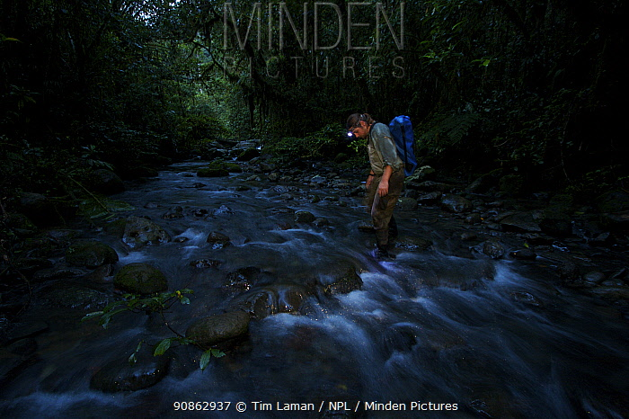 Bird of paradise researcher, Edwin Scholes, wading across a rainforest stream at dusk after a day in the field, Crater Mountain Wildlife Management Area, Eastern Highlands Province, Papua New Guinea, September 2005