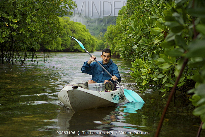Field Assistant Zafer Kizilkaya paddling a kayak through a mangrove channel. The forested slopes of Kosrae Island are in the background. Kostrae Island, Federated States of Micronesia. June 2005. model released