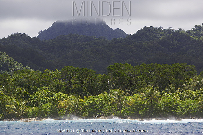 View of the rugged coast of Kostrae Island, Federated States of Micronesia. July 2005