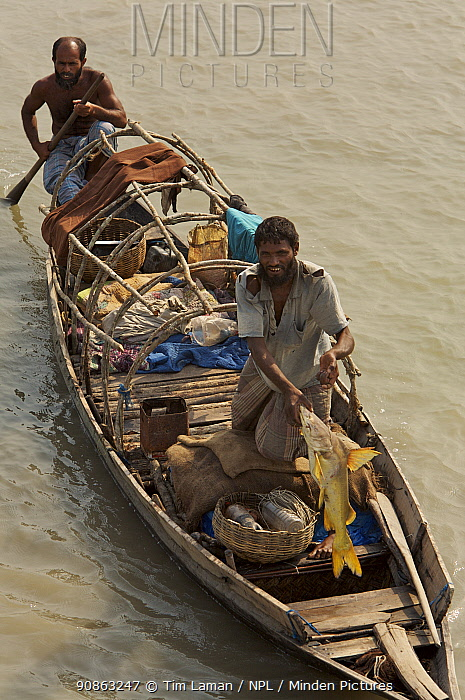 A fisherman displays his catch of a large catfish, Sundarbans, Khulna Province, Bangladesh, March 2006
