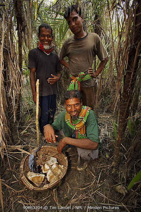Honey hunter team leader Mathab Gazi (seated) and team members with the basket of the first honey collected for the season, Sundarbans, Khulna Province, Bangladesh, April 2006