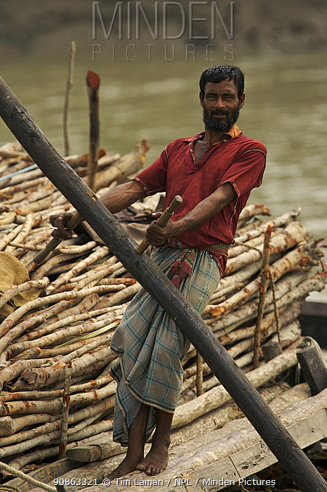 Charcoal wood collector with boat loaded with Goran wood (Ceriops sp) harvested from the mangrove forest, Sundarbans, Khulna Province, Bangladesh, April 2006