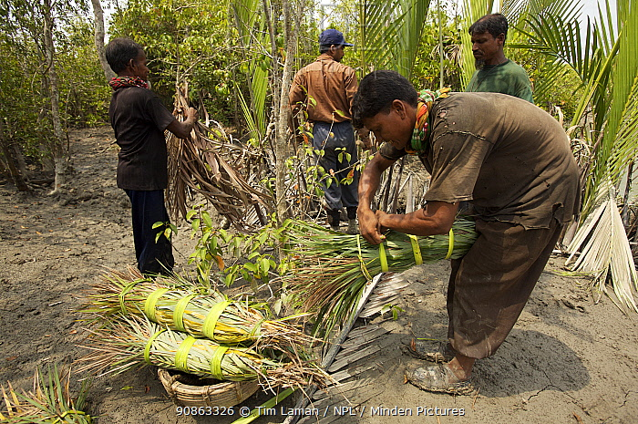 Honey collectors preparing smoke torches to smoke out bees during honey collection, Sundarbans, Khulna Province, Bangladesh, April 2006
