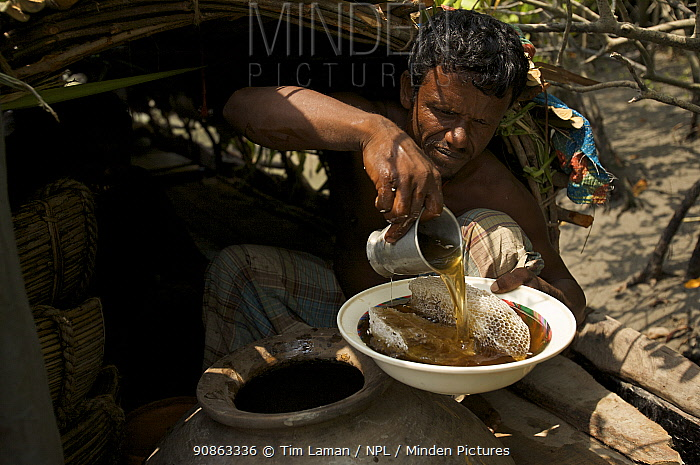 Honey collector pouring out a bowl of honey to give to the photographer, Sundarbans, Khulna Province, Bangladesh, April 2006