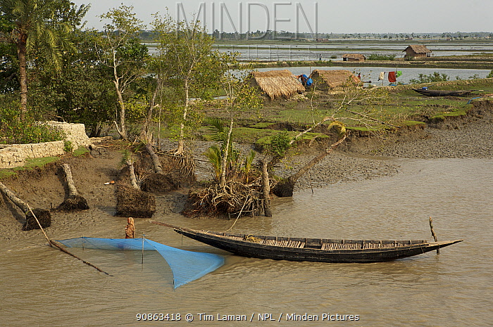 A net is set for catching shrimp fry along the Passur River. Mud and thatch houses of shrimp fry fisherman and shrimp ponds visible in the background, Sundarbans, Khulna Province, Bangladesh, April 2006