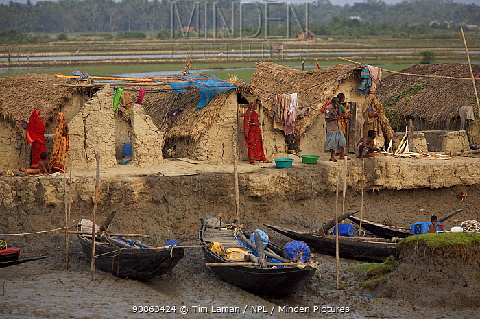 Village of Chandpai on the Passur River, where shrimp fry fishing to supply shrimp for the shrimp ponds is the main industry. Villagers live in simple mud and thatch huts that are washed away by high waters every year. Sunderbans, Khulna Province, Bangladesh, April 2006