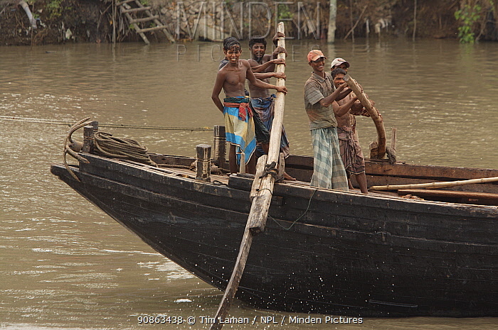 Men operating the oars to power a cargo boat on the Rupsha River, Sundarbans, Khulna, Bangladesh, April 2006