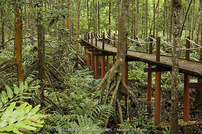 A boardwalk for visitors to the Matang mangroves. Taiping vicinity, Perak, Malaysia. May 2006