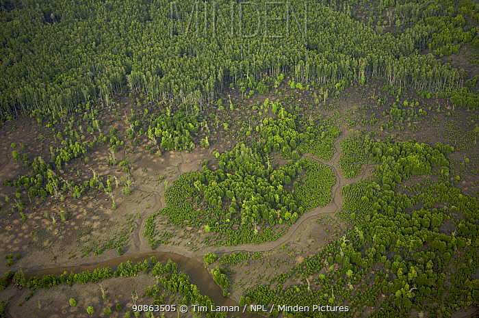 An aerial view of regenerating mangroves in the Sungai Petani area, Perak, Malaysia. May 2006