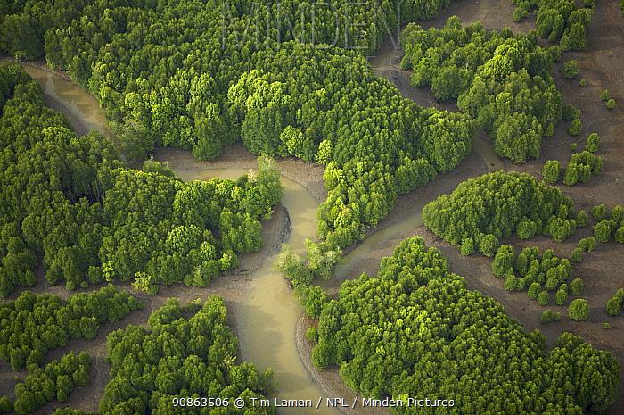 Aerial view of an area of mixed mangrove species and regenerating mangroves. Sungai Petani vicinity, Kedah, Malaysia. May 2006